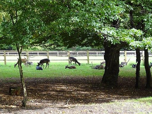 Bentley Priory Deer Park