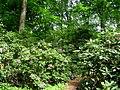 Berlin Tiergarten vista - IMG 8376.JPG