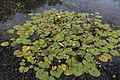 Betts Lane and Common Road junction pond at Nazeing, Essex, England 05.JPG