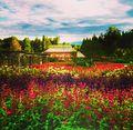 Biltmore gardens.jpg