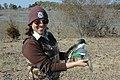 Biologist Banding a Northern Shoveler (8574372929).jpg