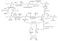 Biosíntesis de la serina.png