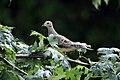 Bird (4847480651).jpg