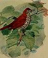 Birds of the New York city region (1923) (20197405059).jpg