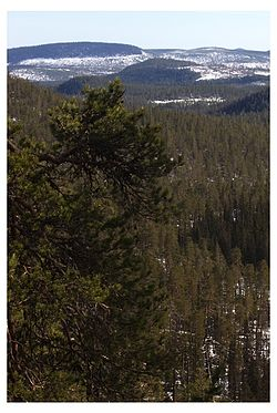 Björnlandets nationalpark.jpg