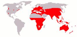 Leefgebied zwarte rat