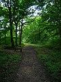 Blean Woods Nature Reserve - geograph.org.uk - 534431.jpg