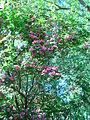 Blossoms 11.JPG