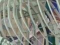 Blue Whale skeleton CAS rib cage 3.JPG