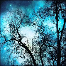 Blue dream.jpg