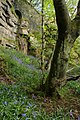 Bluebells, Bob Wood - geograph.org.uk - 412446.jpg