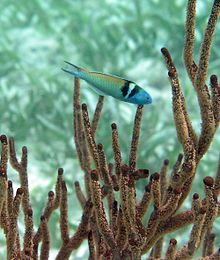 A fish swimming amidst long fingers of coral