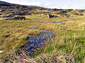 Bog on the Sheepshead Peninsula - geograph.org.uk - 14832.jpg