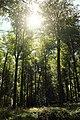 Bois de la Louvière - Livierenbos, Flobecq - Vloesberg 07.jpg