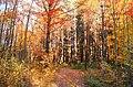 Bois du révérend Ponton - panoramio.jpg