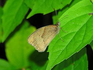 Bolboreta-butterfly937.jpg
