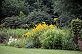 Border plants Clavering Essex England.jpg