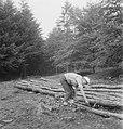 Bosbewerking, arbeiders, boomstammen, werkzaamheden, Bestanddeelnr 253-5187.jpg