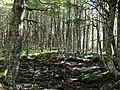 Bosque de Lengas.jpg