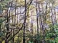 Bosque tupido.jpg