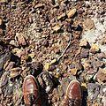 Bouddi National Park - Rocky Hills.jpg