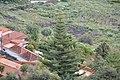 Breña Baja, Santa Cruz de Tenerife, Spain - panoramio (1).jpg