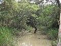 Brejo trecho da ciclovia Parque da Cidade Dez-2011. - panoramio.jpg