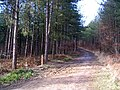 Bridlepath in Bedgebury Forest - geograph.org.uk - 344019.jpg