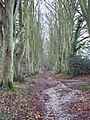 Bridleway from Burcombe to the Old Shaston Drove - geograph.org.uk - 318240.jpg