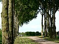 Bridleway to Land of Nod from Skiff Lane, Tollingham - geograph.org.uk - 184744.jpg