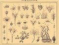 Brockhaus and Efron Encyclopedic Dictionary b60 934-0.jpg
