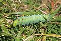 Bronte Creek PP caterpillar.JPG