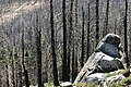 Burned Woods, South Lake Tahoe, CA - panoramio.jpg