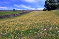 Buttercup Meadow - geograph.org.uk - 839574.jpg