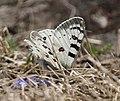 Butterfly (13800 ft) I IMG 7201.jpg