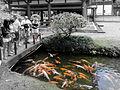Byodo-In Temple Oahu 3.JPG