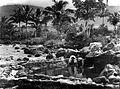 COLLECTIE TROPENMUSEUM Visvijvers Tjipanas bij Trogong Oost Preanger TMnr 10013499.jpg