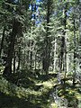 Cañadas del Parque Nacional La Malinche, Tlaxcala (25133634605).jpg