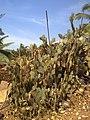 Cactus rocky beach goa.jpg