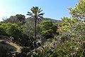 Cala de los piratas - El bosque y palmeras - panoramio.jpg