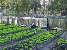 Chinampa wikip dia for Xochimilco jardin flottant
