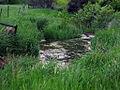 Cameron Creek.jpg