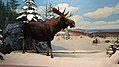 Canadian Museum of Nature, McLeod St, Ottawa (492053) (9450563896).jpg