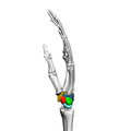 Carpus (left hand) 12 ulnar view.png