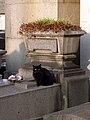 Cat - Père Lachaise Cemetery - 041.jpg