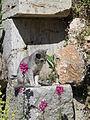 Cat in the ruins of the Greek Theatre built in 200 BC, Lychnidos, Ohrid, Republic of Macedonia FYROM (8398210136).jpg