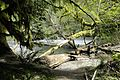 Cathedral Grove - Old Growth Forest - Vancouver Island BC - Canada - 04.jpg
