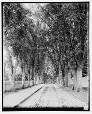 Springfield Cemetery (Springfield, Massachusetts) - Image: Cemetery Avenue Springfield Mass 1905