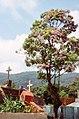 Cemiterio em Paranapiacaba (3357923781).jpg