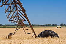 Center pivot irrigation.jpg